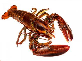 Fret maritime de homards du Maine